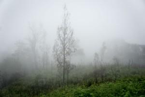 Nebel. Aber frage nicht wie