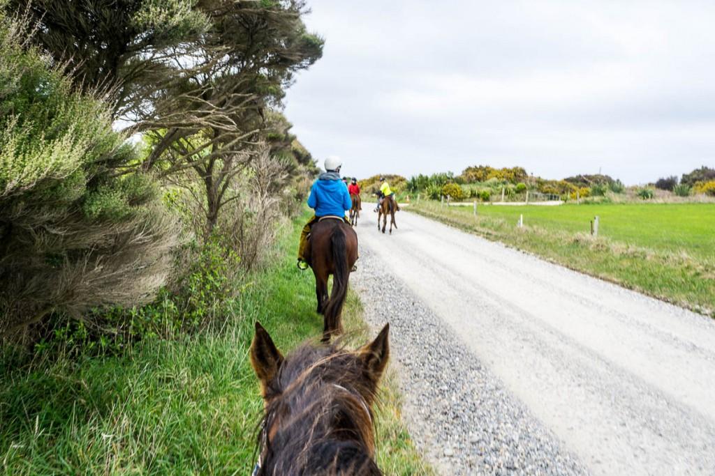 Horsetrek Farewell Spit-1
